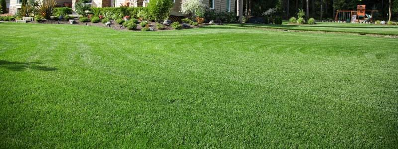 DeWitt MI Residential Lawn Care & Maintenance